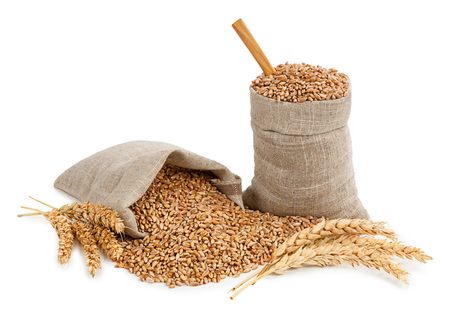 Wheat and ears isolated on white background