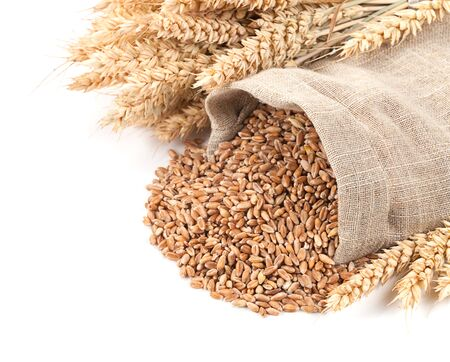 Wheat in a sack and ears on a white background isolated.