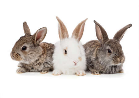 Rabbits isolated on a white background. Easter concept