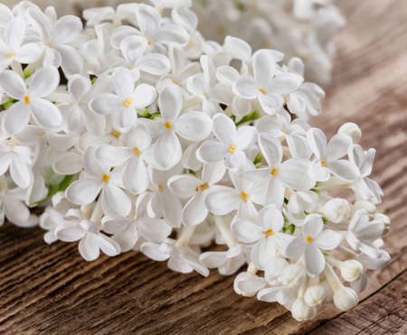 lilac on a wooden background .Spring flower