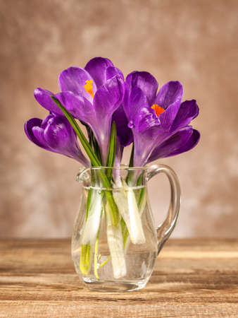 Spring crocuses on the old board. Easter concept