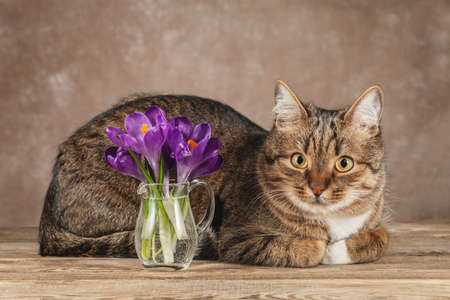 Pet cat and beautiful flowers on the table. Фото со стока