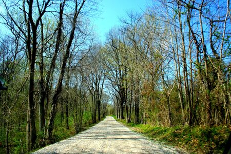 Gravel Road Lined with Trees Imagens