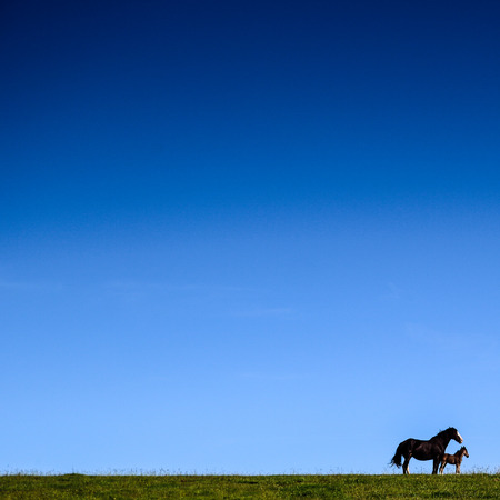 mare: Foal and Mare