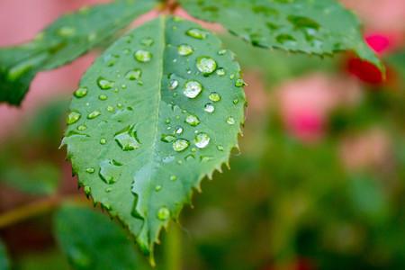 dew: dew Stock Photo