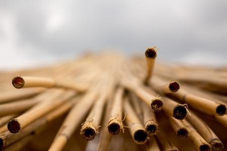 reed stem: straw Stock Photo