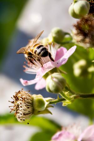 brambleberry: Flower