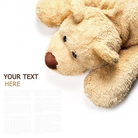 osos de peluche: el oso pardo se extiende sobre un fondo blanco (con texto de ejemplo)