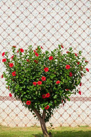 Green Tree in the shape of a heart. Shorn bush with red flowers in the shape of a heart in the street. Heart shape tree Love and nature concept Stok Fotoğraf