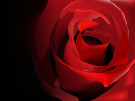 Red rose on black vector illustration
