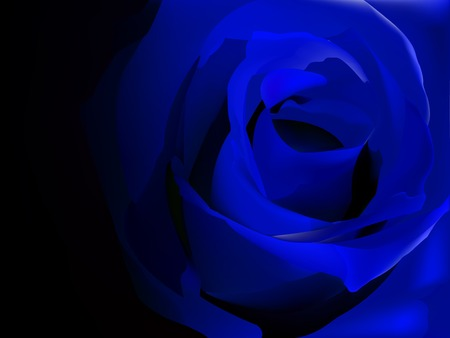 Blue rose on black vector illustration Illustration