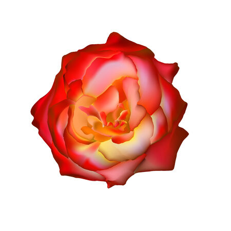 rad: rad rose isolated on white. See more like it in my portfolio