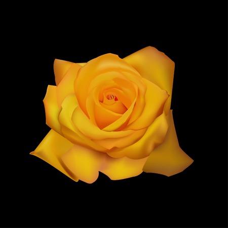 beautiful rose yellow vector illustration Illustration