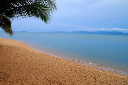 Tropical beach with palm trees blue cloud