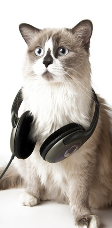 Cat and headphones photo