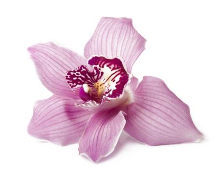 흰색에 고립 된 핑크 난초