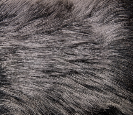 pelt: close up shot of abstract fur background Stock Photo