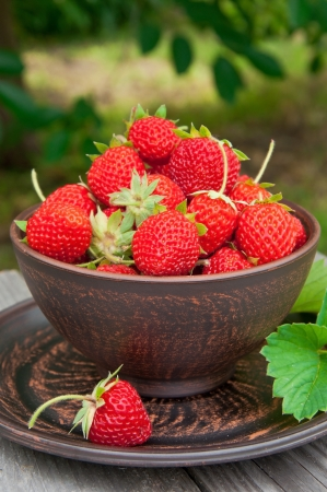 Strawberries on a bowl in the summer garden Stock Photo - 20332577