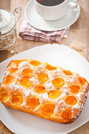 Sponge cake with apricots sprinkled with powdered sugar photo