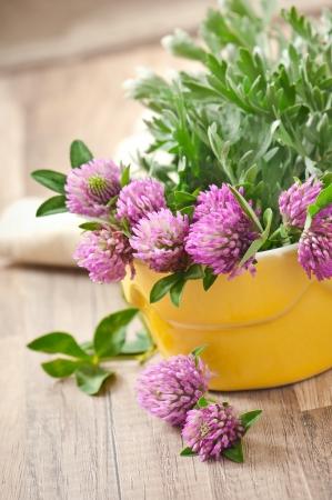 sagebrush: herbal herbs -sagebrush and clover