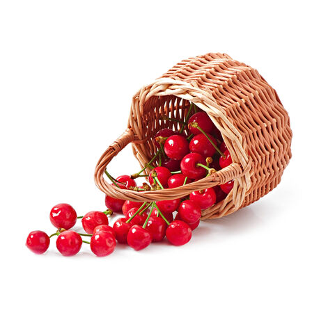 fresh cherries in a wicker basket photo