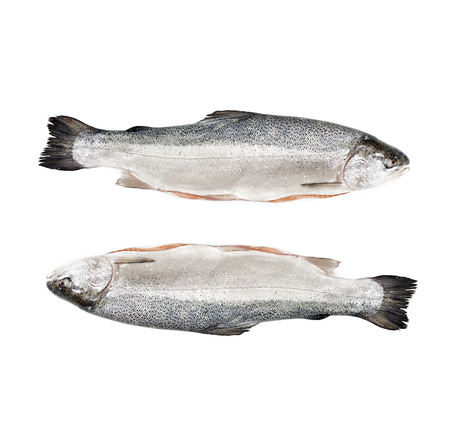karkas: Fresh raw salmon red fish isolated on a white background. Flat lay. Top view Stockfoto