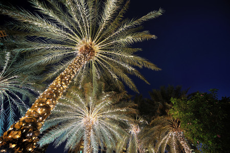 palm trees decorated with Christmas garland night
