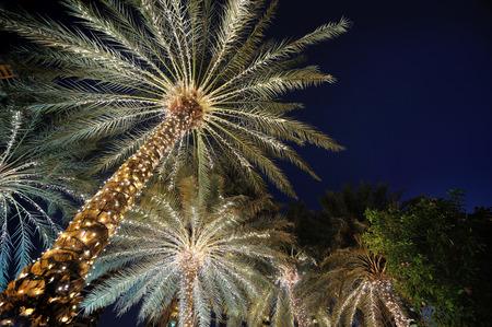 palmier: palmiers d�cor�s de la nuit de No�l guirlande