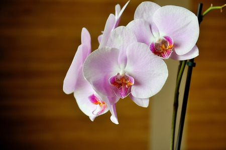 blooms: Orchid Blooms