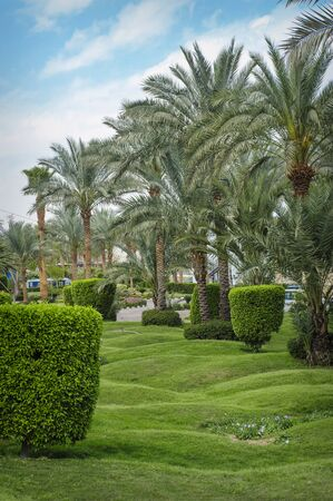 grassplot: Beautiful palm trees in tropical garden