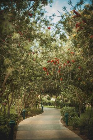 entrance arbor: blooming garden in Egypt