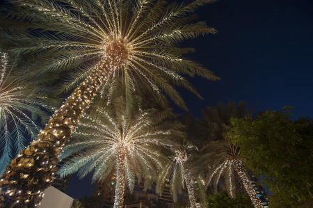 palms: fondo de la Navidad de la palmera