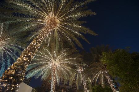 arbre paysage: no�l fond palmier Banque d'images