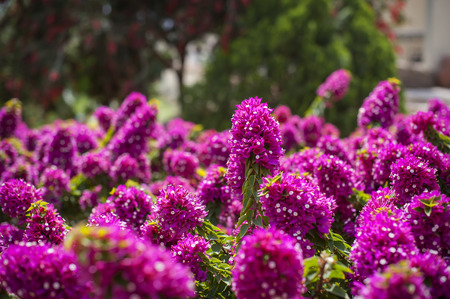 exotic: Flores ex�ticas