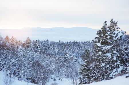 겨울 숲과 설정 태양. 스톡 콘텐츠