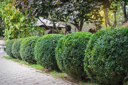 trimmed: landscaped green park, trimmed round shape.