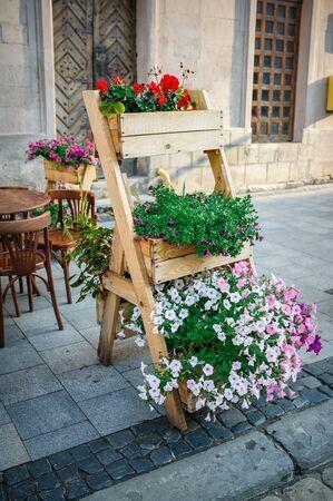 jardines con flores: Flores en las calles de Lviv. Foto de archivo