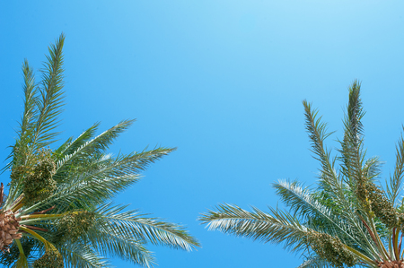 palm frond: palm frond against blue sky.