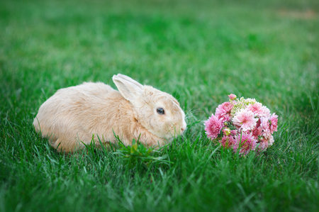 midget: Little rabbit and a bouquet of flowers on the grass.