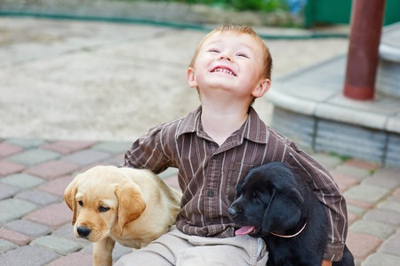 two boys: little boy playing outdoor with a two Labrador puppies.