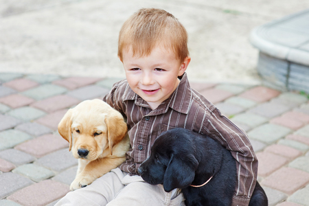 labrador: little boy playing outdoor with a two Labrador puppies.