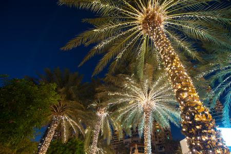 palmier: noël décoration d'arbre fond de palme. Banque d'images