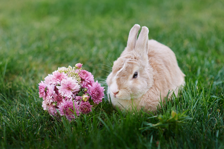 midget: Fluffy bunny and a bouquet of flowers on the grass.