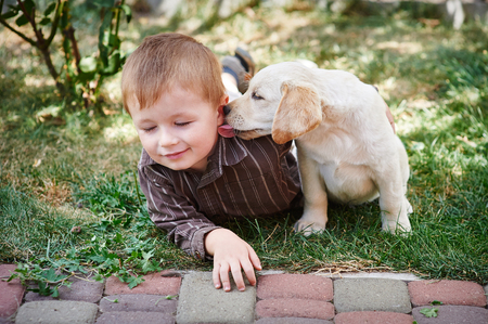 boy shorts: little boy playing with a white Labrador puppy.