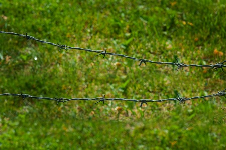 barbed wire fence: Barbed wire fence and green grass field.
