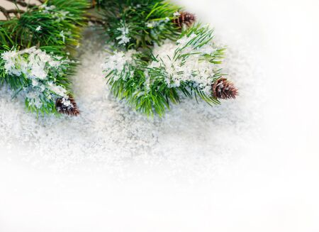 lacet: fir branches in the snow on a white background. Stock Photo