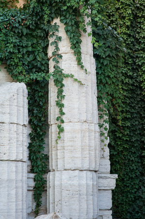 palmate: old columns with curly green plants