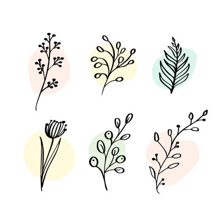 Vector Set botanic elements wildflowers, herbs. Collection garden and wild foliage, flowers, branches. Illustration isolated plants on white background