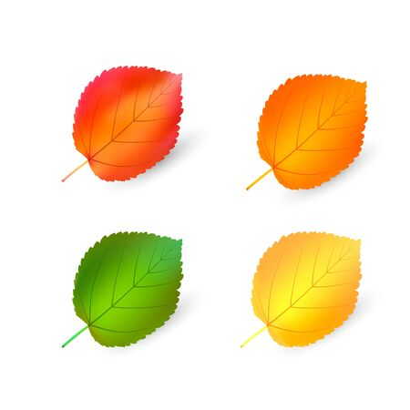 autumn leaves set, bundle vector illustration mesh. Isolated on a white background. Simple cartoon multicolor style.