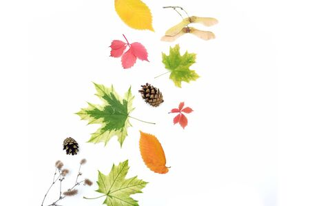 Isolated autumn leaves and cones on white background. fall flat lay, top view creative objects. Elements for Thanksgiving day design